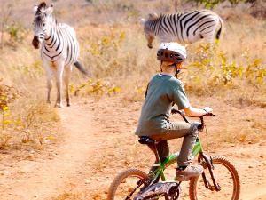 Junge auf dem Fahrrad mit Zebras im Miliwane Naturpark