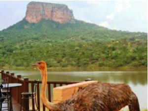 Eindrücke der Südafrikareisen unserer Kunden