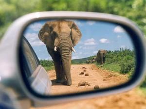 Garden Route mit Kindern: Elefant fotografiert aus dem Spiegel eines Autos