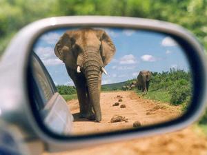 Elefant fotografiert aus dem Spiegel eines Autos