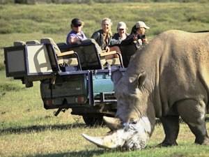 Südafrika Gruppenreise: Auf Safari