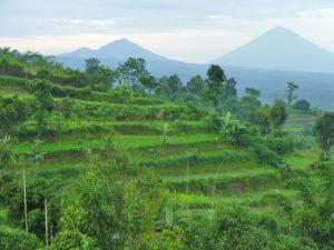 Reisterrassen von Bali.