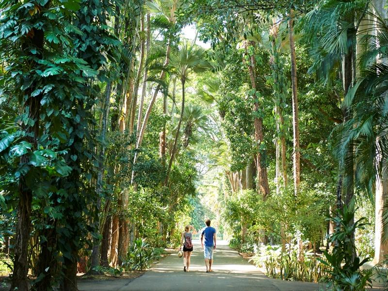 Botanischer Garten Mauritius