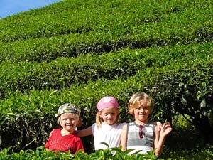 Kinder in den Teefeldern in den Cameron Highlands