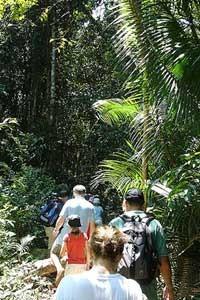 Dschungelwanderung auf Pulau Redang