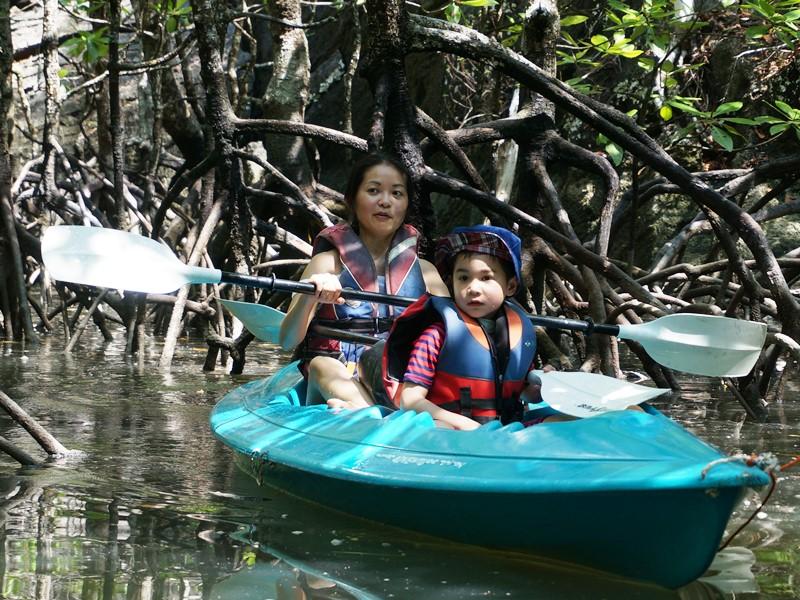 Mangroven-Tour auf Langkawi