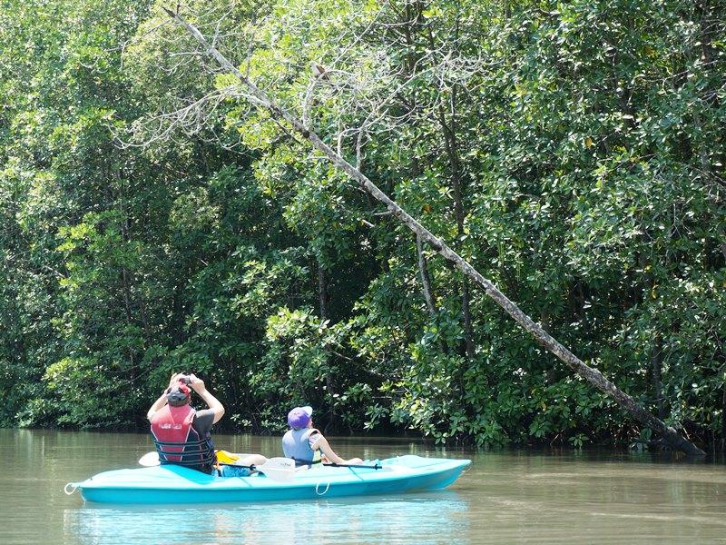 Kajaktour durch die Mangroven