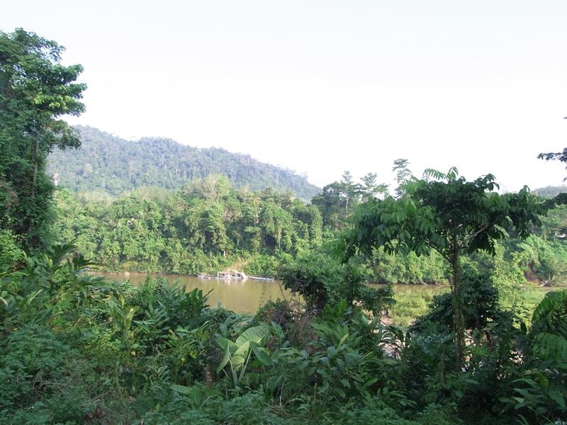 Dschungel im Taman Negara