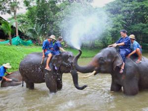 Elefanten in Thailand