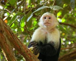 Tiere in Costa Rica