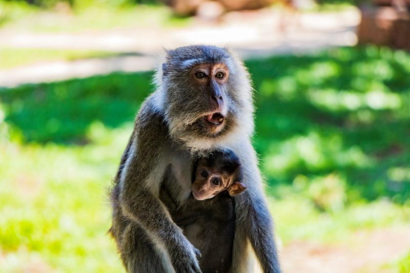 Borneo Familienreise - Bako Nationalpark Affe