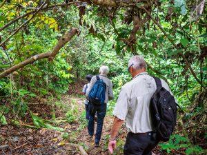 Tabin Wildlife Reserve Dschungelwanderung