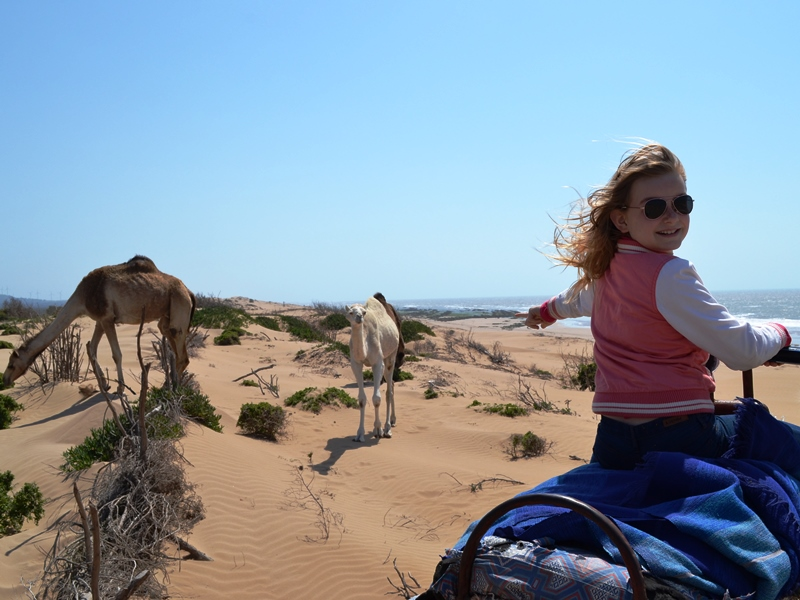 Kameltour Essaouira
