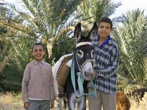 Rundreise Marokko: Einheimische Jungen mit Esel