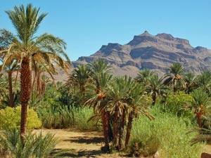 Rundreise Marokko: Palmenoase mit Bergen im Hintergrund