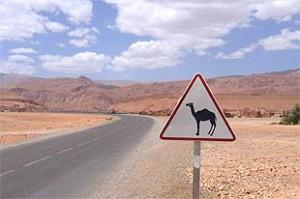 """Einsame Straße mit einem Schild """"Vorsicht Kamele"""""""