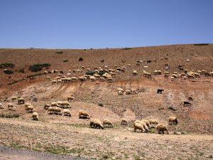 Marokko Familienreise Farmübernachtung Lalla Takerkoust