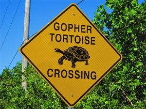 Schildkröte am Strand von Sanibel Island