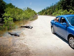 Sunshine State: Wann erspähen Sie Ihre ersten Krokodile?
