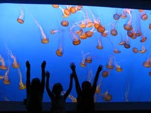 Kalifornien Rundreise: Monterey Bay Aquarium