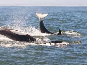 Beim Monterey Bay Aquarium: Wale an der kalifornischen Küstenroute