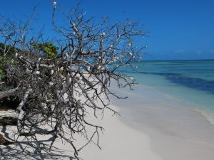Florida mit Teenagern Strand