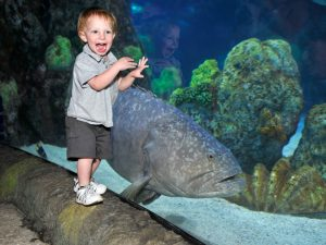 Denver mit Kindern: Aquarium | Quelle: Visit Denver