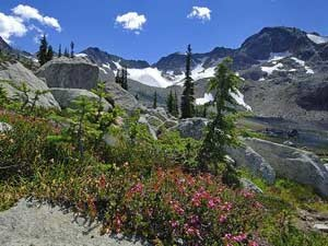 Planzen und Berge von Whistler - Kanada Rundreise mit Kindern