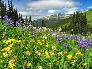 Eine grüne Bergwiese mit bunten Blumen - Kanada Rundreise ab Vancouver