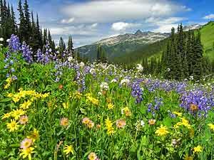 Eine grüne Bergwiese mit bunten Blumen