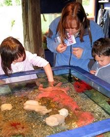 Eine Familie sieht Seesterne im Aquarium
