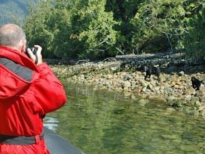 Ein Mann fotografiert einen Bären am Fluss