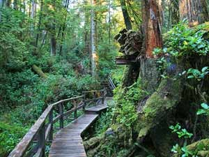 Ein Weg im Wald auf dem Wild Pacific Trail
