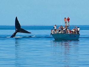 Menschen sehen einen Wal vom Boot aus - Kanada Rundreise mit Kindern