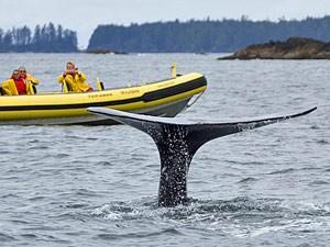 Menschen sehen vom Boot aus die Schwanzflosse eines Wals bei Ucluelet