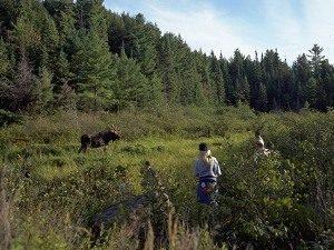 Familienurlaub Ostkanada Algonquin Nationalpark