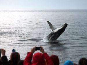 Wale in Tadoussac Kanada beobachten