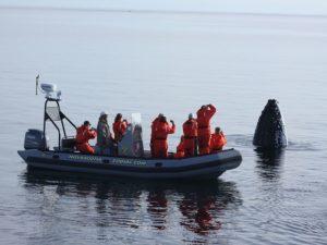 Atlantikprovinzen Kanada Walbeobachtung