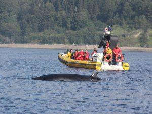 Tadoussac Wale beobachten Kanada