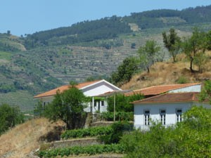 portugal douro vallei wijnhuis