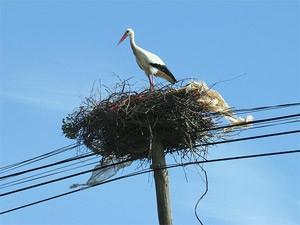 portugal alentejo ooievaar nest