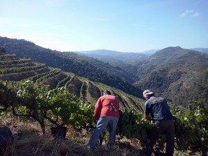 portugal douro vallei boer