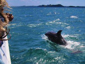 Portugal Familiereis - dolfijnen